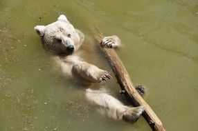 bear floating with a log