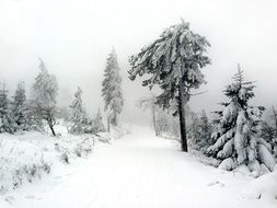 panoramic view of the winter forest in the haze