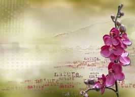 Banner with pink orchids