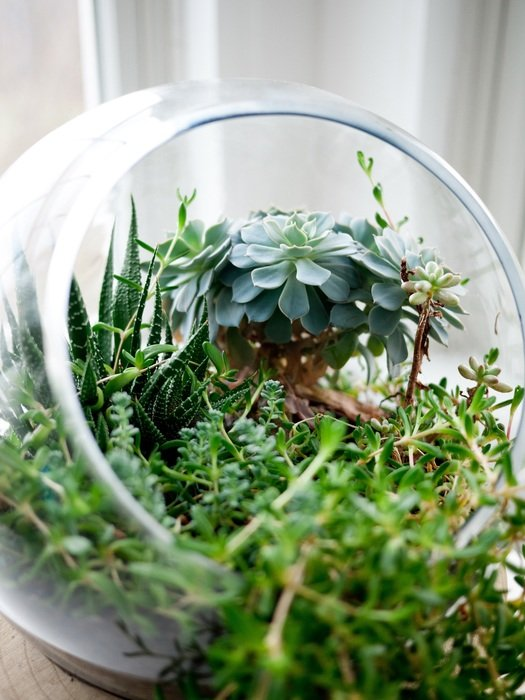 Green succulents in the bowl