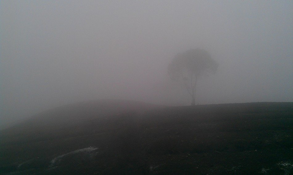 tree silhouette in dense fog