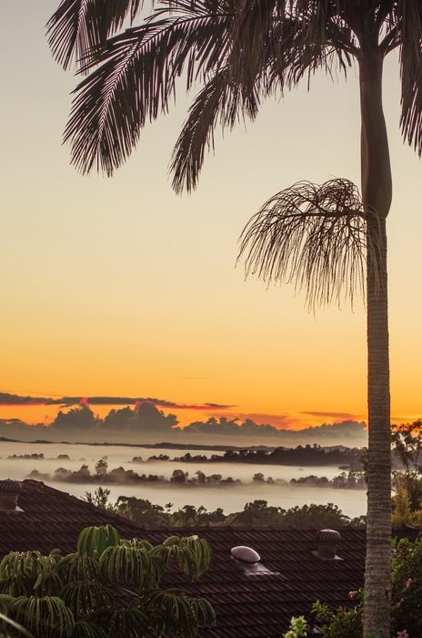 fog on the tropical coast at sunrise