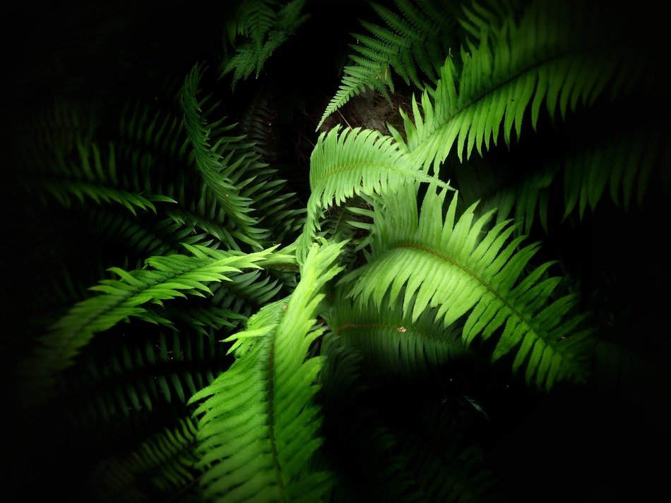 closeup photo of green fern leaves in the dark