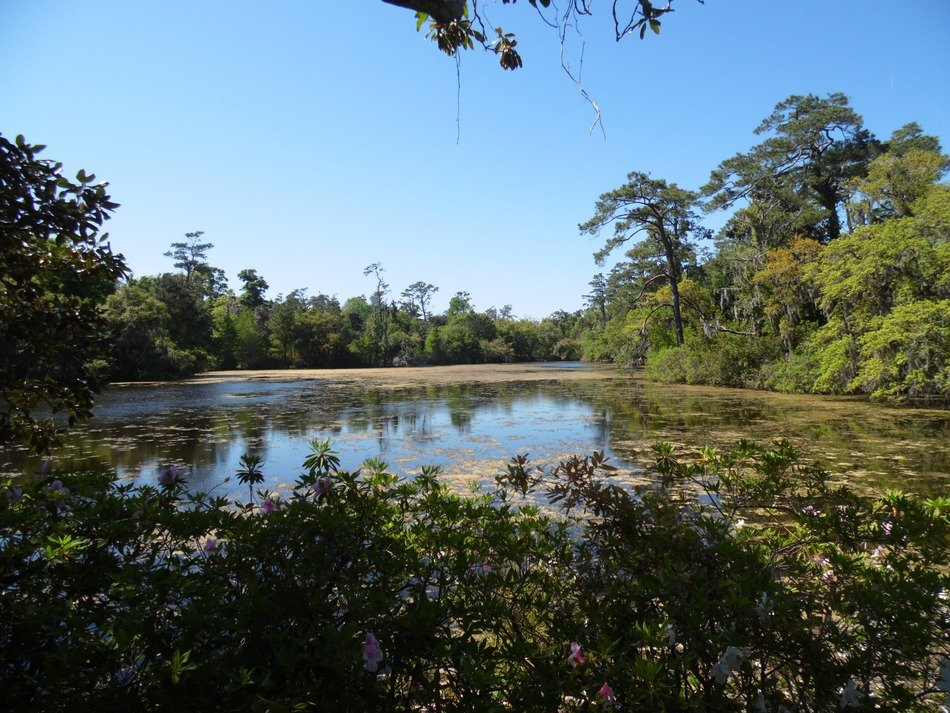landscape of the forest and pond in arlie garden