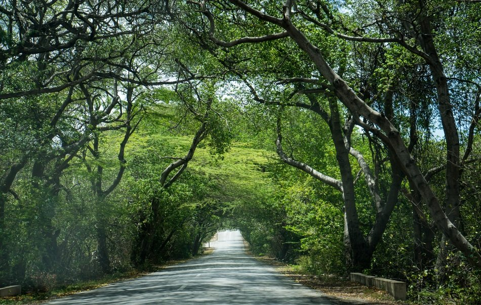 Road in wild green trees forest