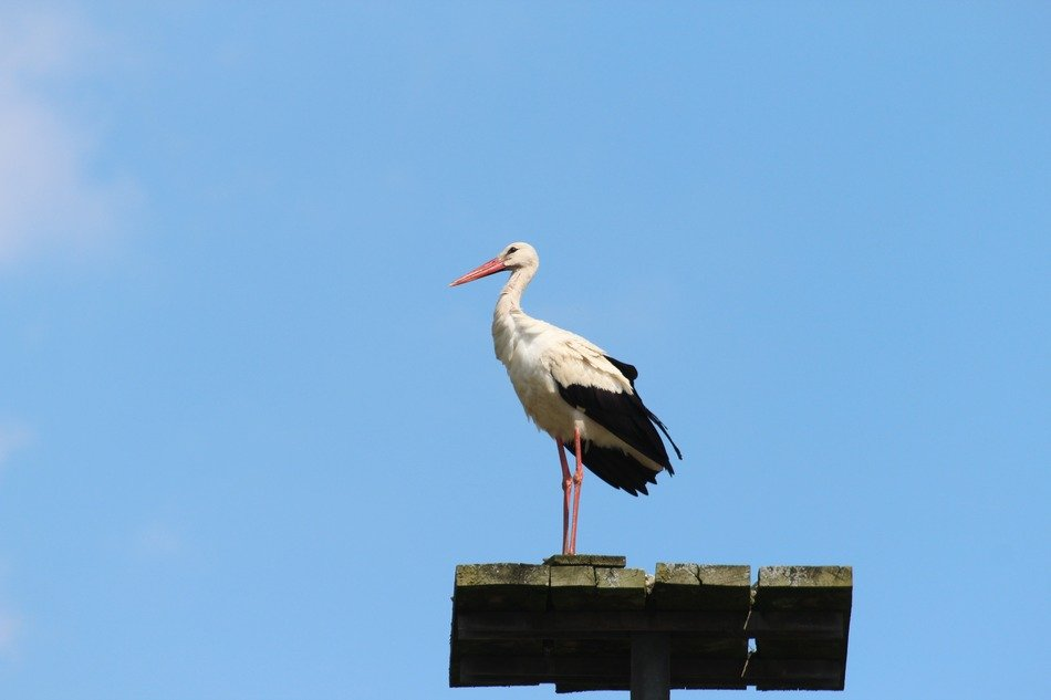 Stork on a background of blue clear sky