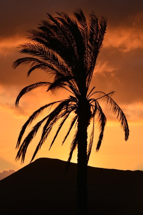 young palm tree on a dark golden sunset background