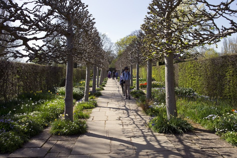 pleached trees avenue with stone path