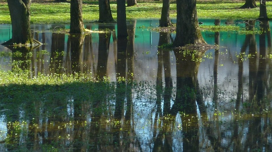reflection of tree trunks in water