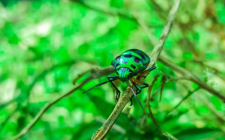 green beetle in the black point in the forest