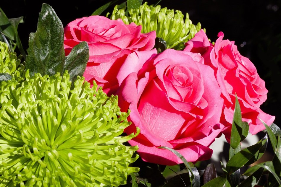 bouquet of pink roses with green chrysanthemums