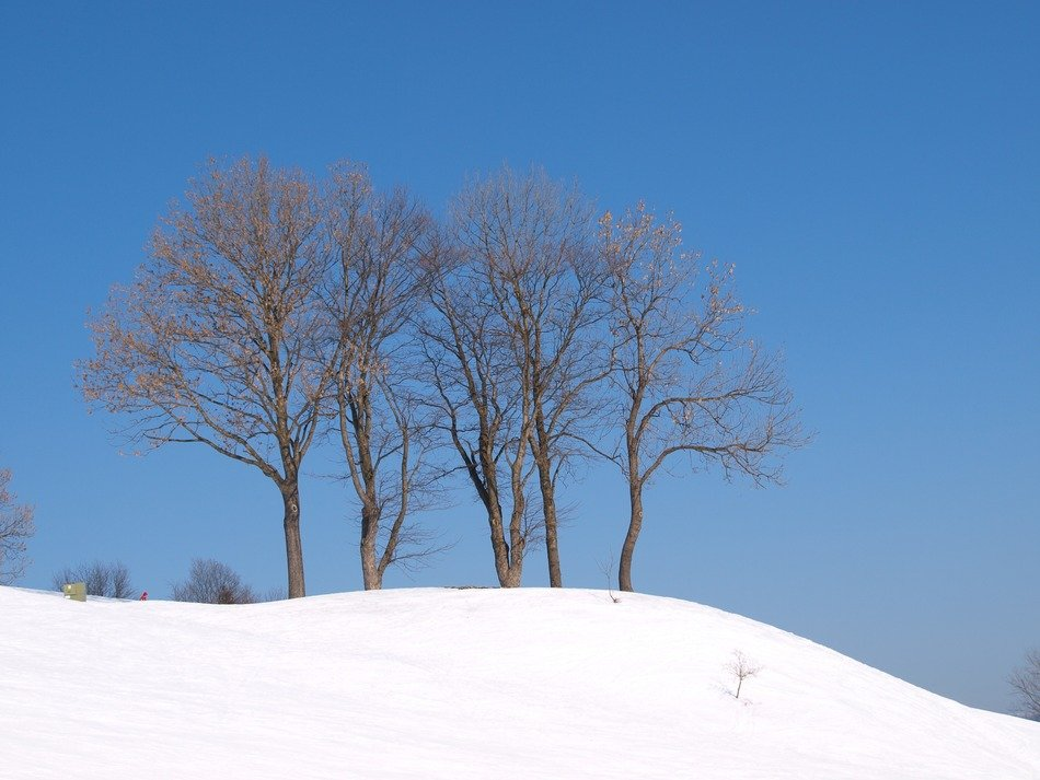 trees on a hill in the snow