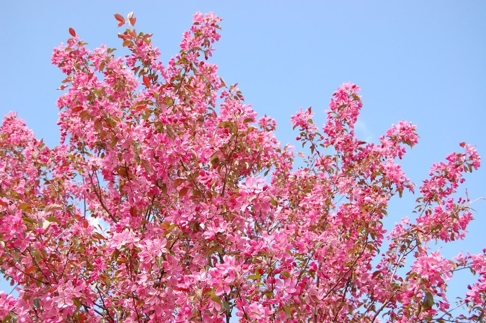 Pink flowers on the tree in spring