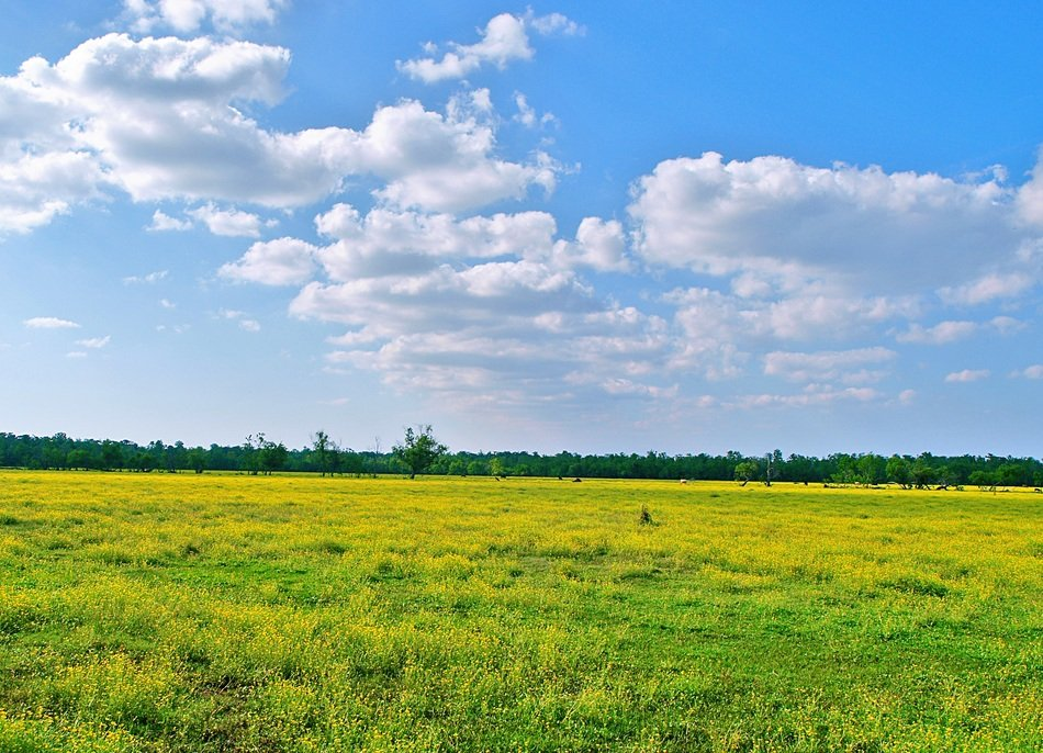 white clouds in the sky over a field with green grass