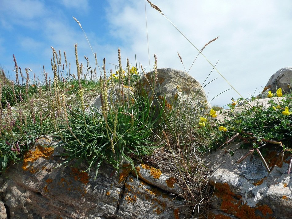 grasses rock landscape