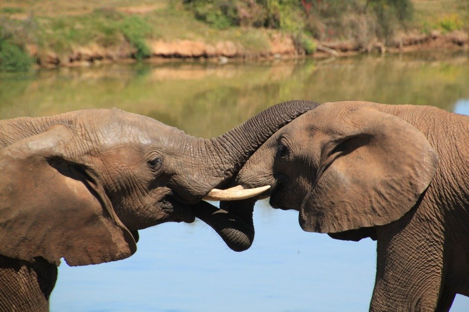 Elephants in a national park in africa