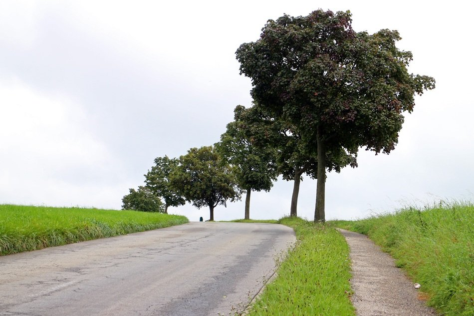 green trees along the road