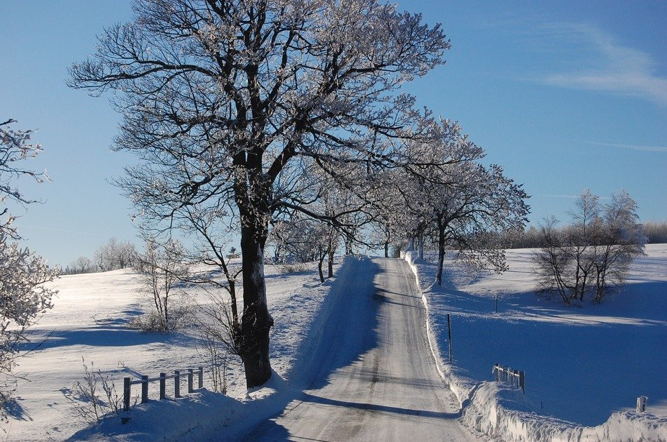 trees along the road in a winter landscape