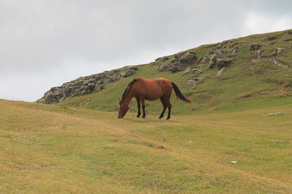 brown mare in a pasture on a hill