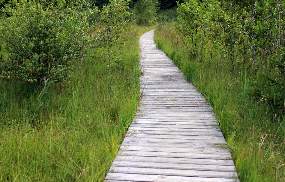 wooden path through the meadow