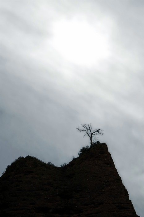distant view of a tree on a hill