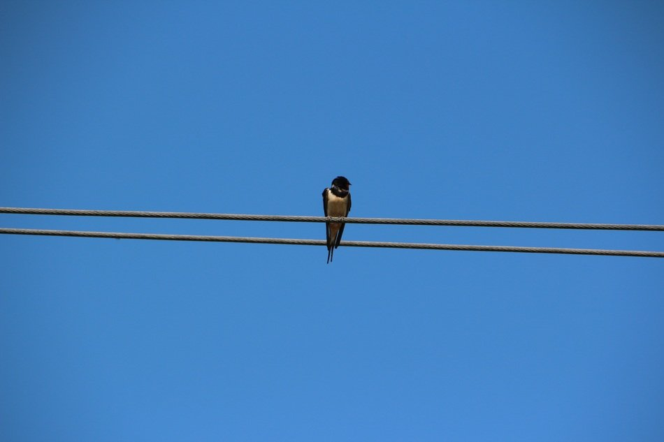 a swallow on a background of blue sky