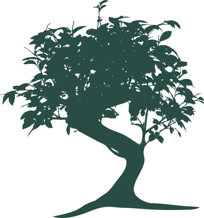 picture of green bonsai tree