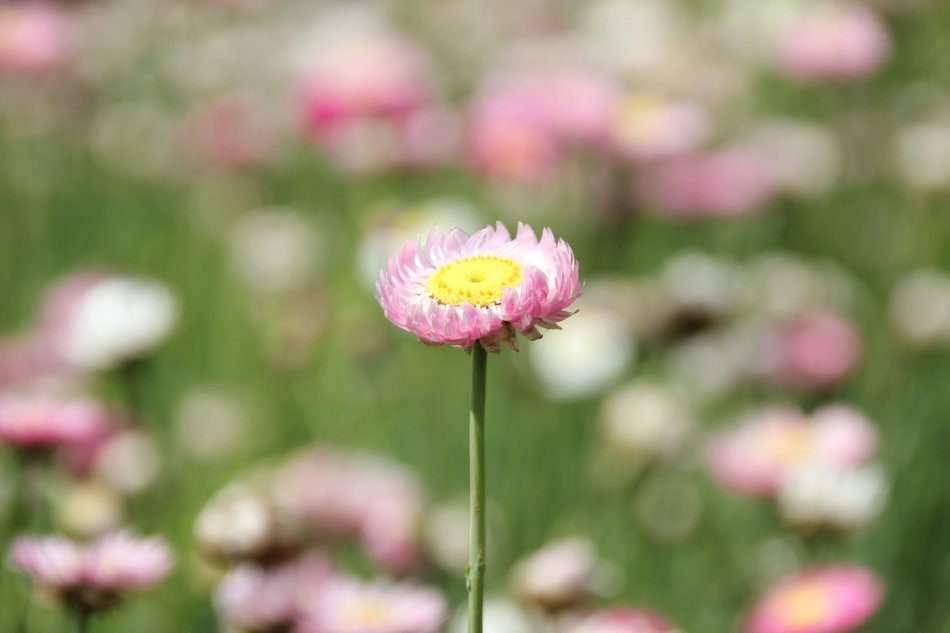 blooming summer meadow in blurred background