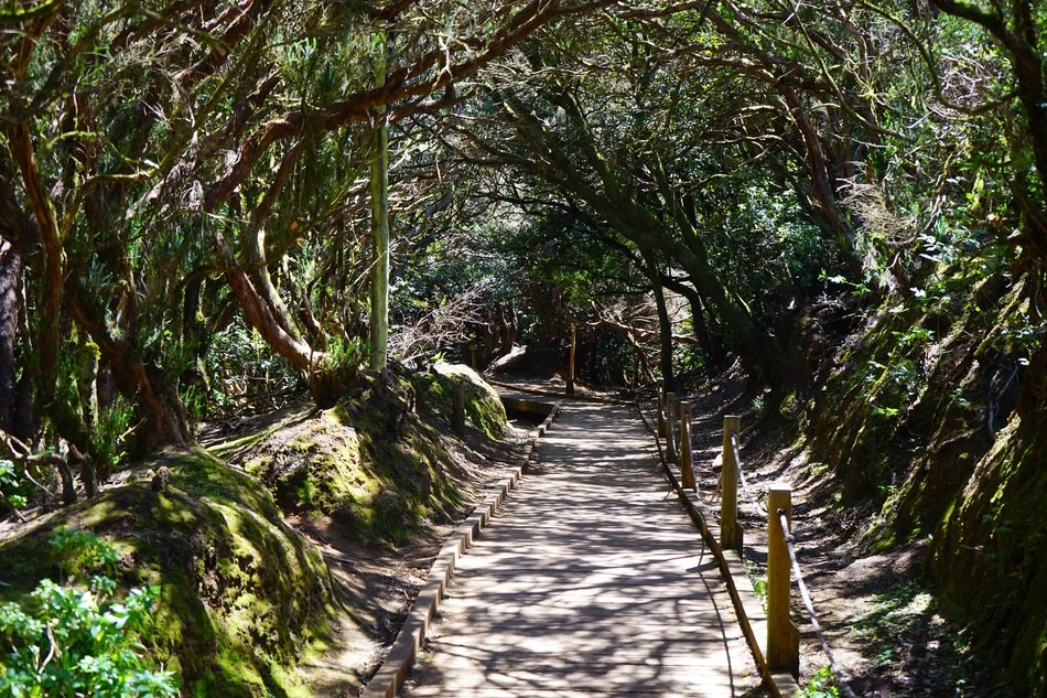 wild path in tenerife forest