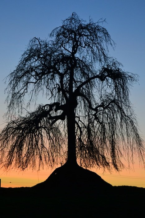 beautiful and delightful tree sunset