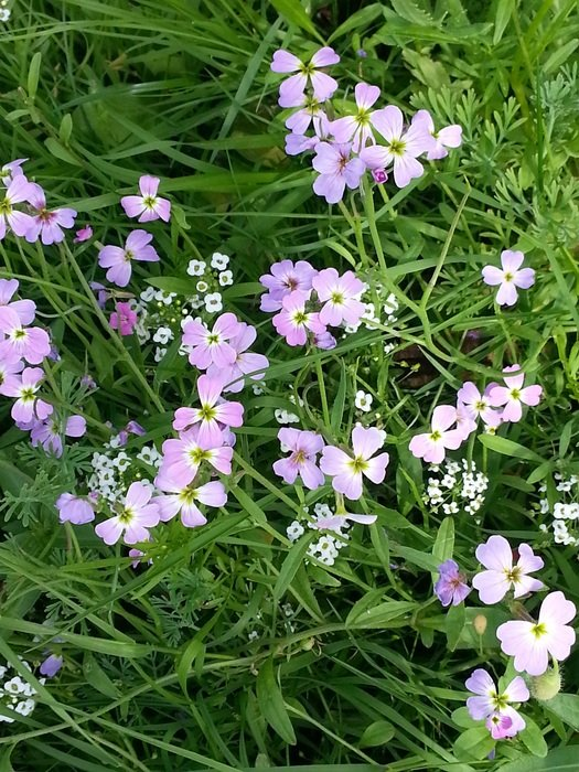 wild flowers on a background of green grass