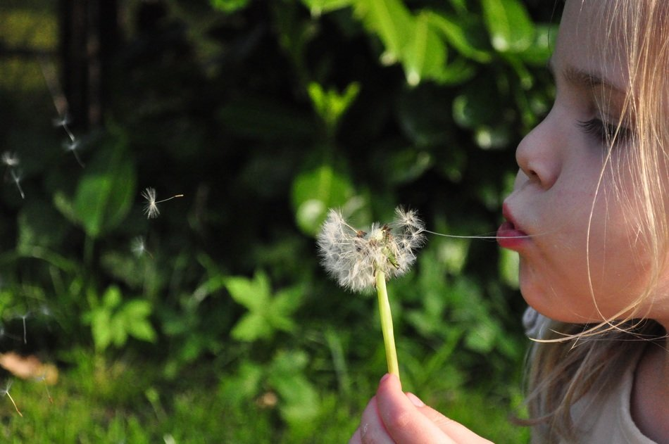 girl is blowing white dandelion at blurred background with the plants