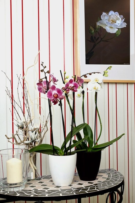 Orchids in flower pots on a table