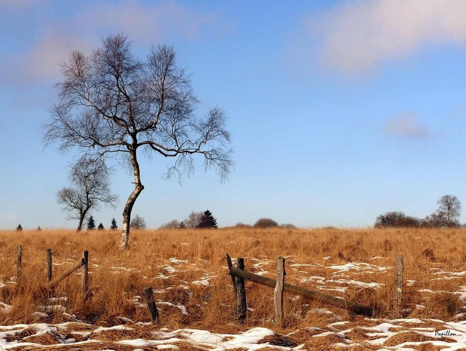 tree in brown field