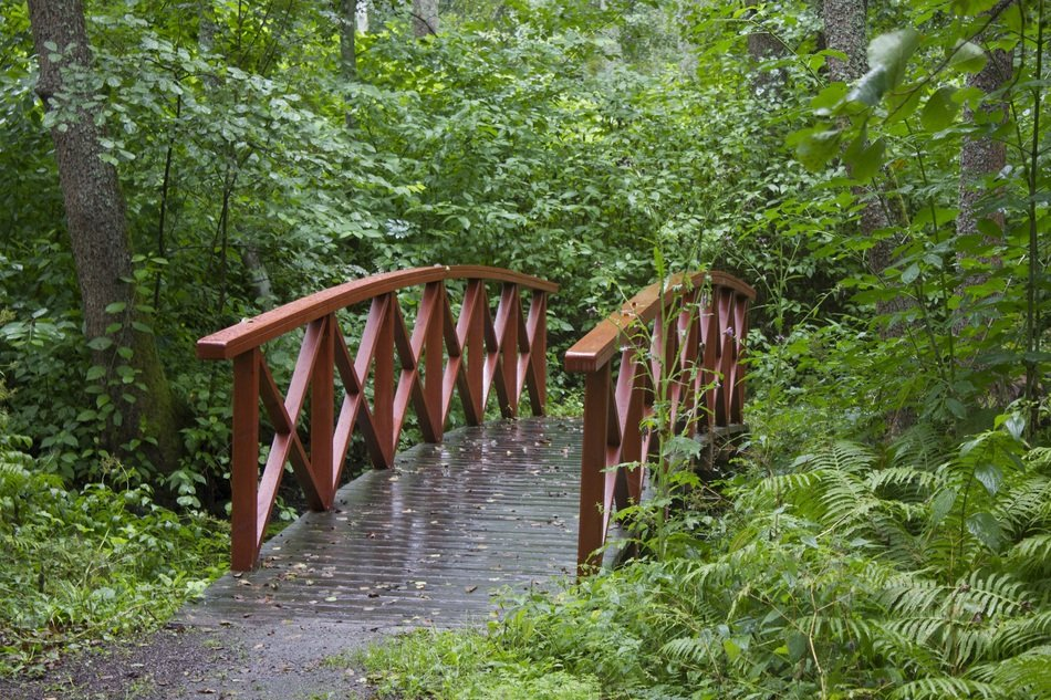 wooden red bridge in green forest