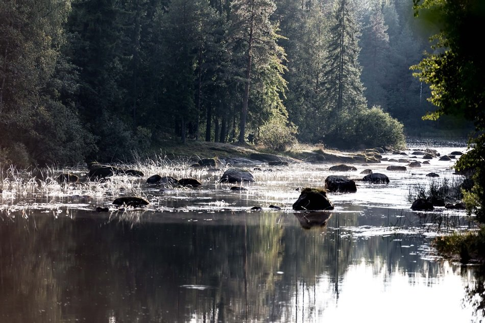 landscape of forest rivers under the morning sun
