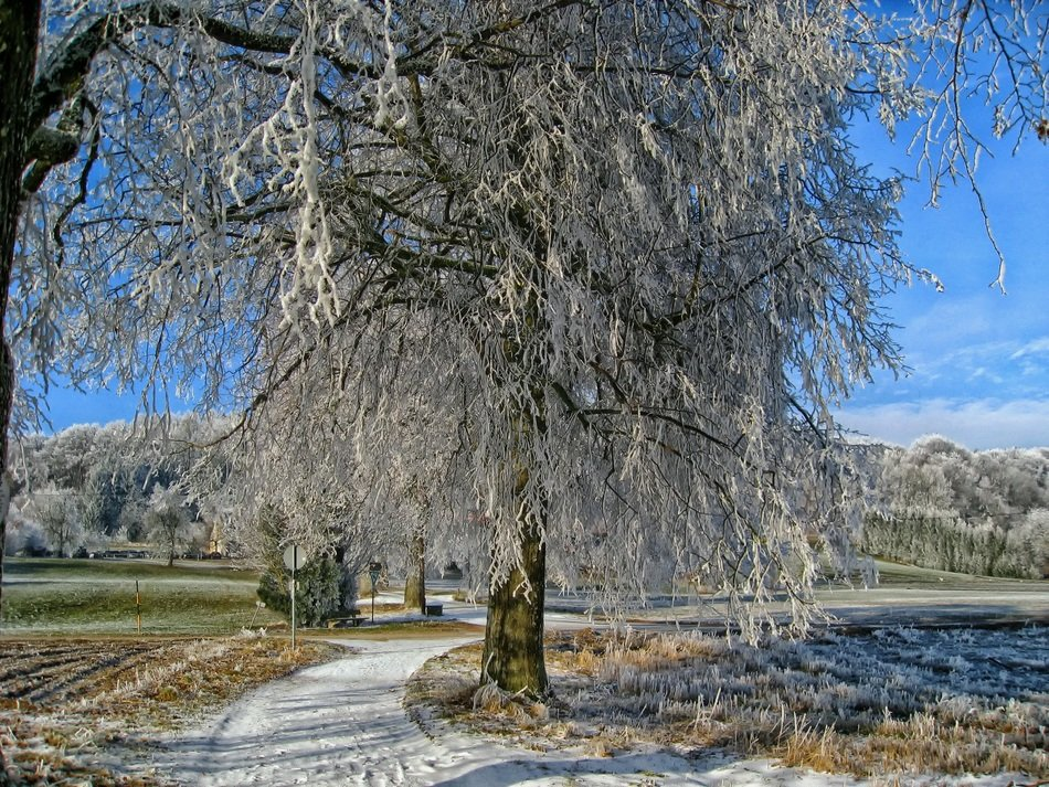 tree in hoarfrost in Bavaria, Germany