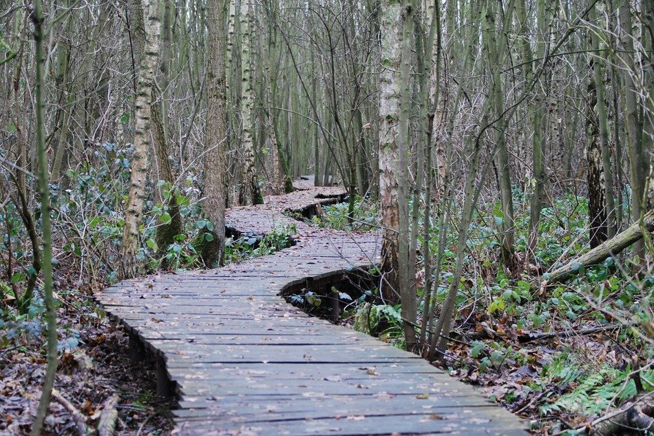 wooden walking path in the forest
