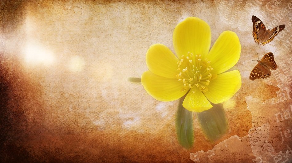 background with a potentilla flower