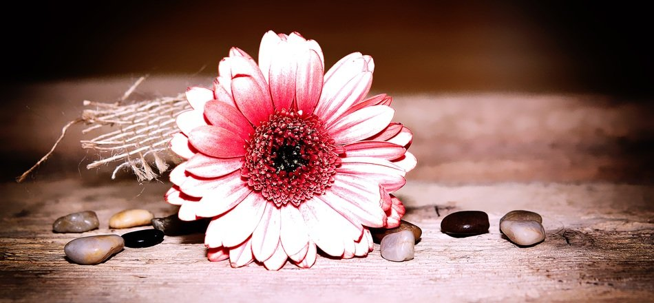 decoration of gerbera bud and stones