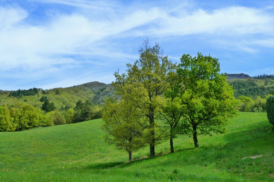 panorama of green trees on the hills