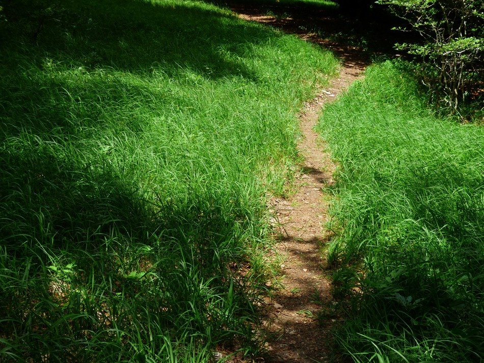 forest path among green grass