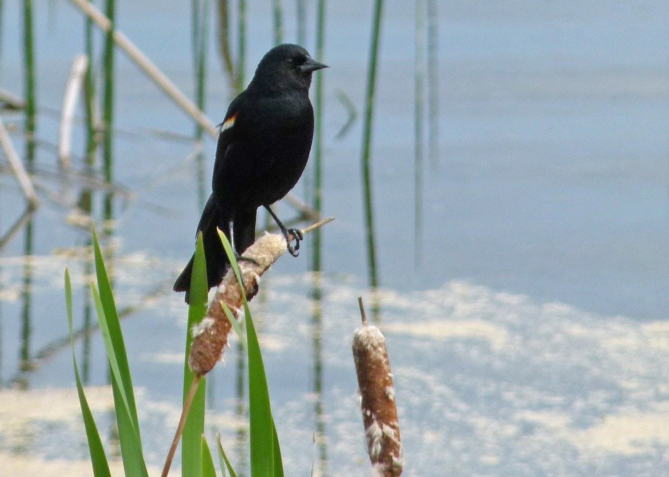 very beautiful black bird