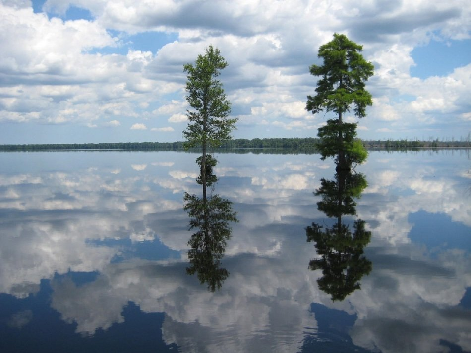 two green trees reflected in mirrored water in north carolina