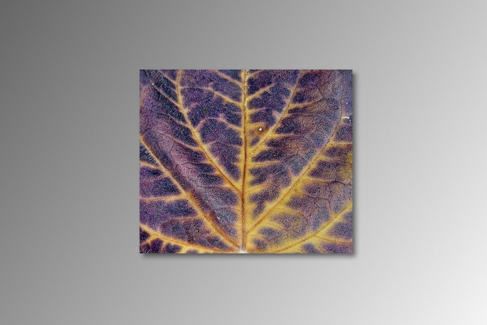 picture of Colorful leaf in the autumn