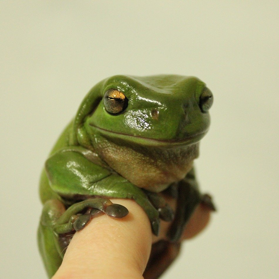 little frog on finger