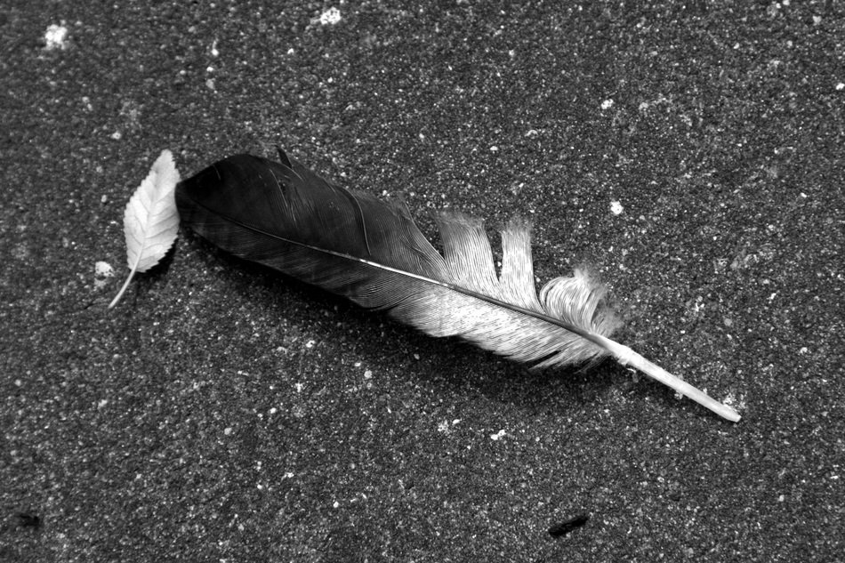 black and white feather on the road