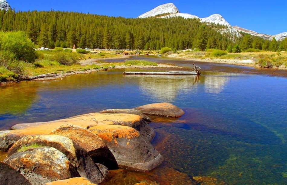 clear stream in view of forest and scenic mountains, usa, california, yosemite national park