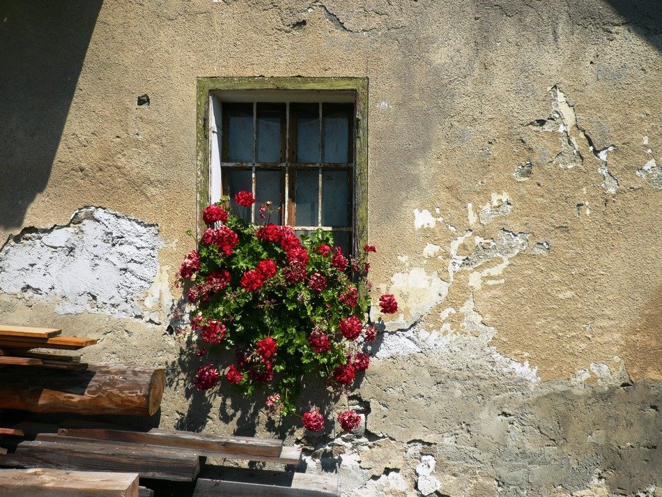 red geranium as a decoration of the old facade