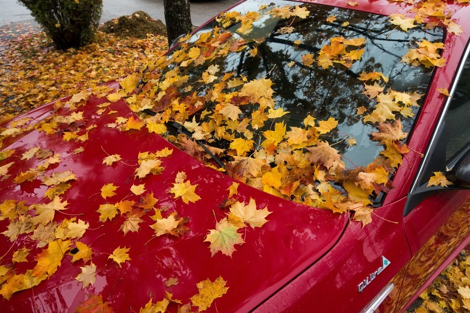 red alfa romeo in autumn leaves